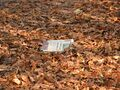 Autumn leaves with news paper.jpg