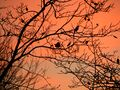 Bird in tree with red sky.jpg